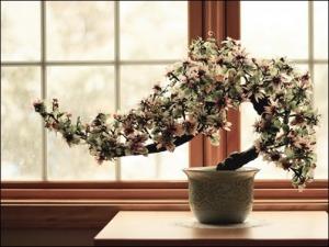 Bonsai-Trees-bonsai-wallpaper