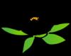 lotus-flower-th